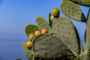 Cactus Fig Plant Prickly Pear  - Zotx / Pixabay